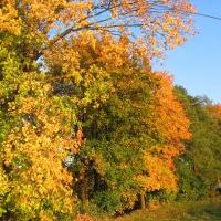 stary-waliszow-drzewa.jpg