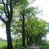 stenclowka-aleja