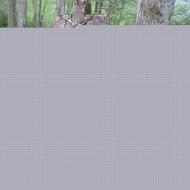 stuposiany-cmentarz-3