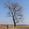 swiete-drzewo-4