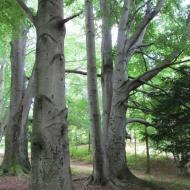 1771-73-szczawno-zdroj-park-zdrojowy-buki-2