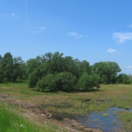 szczedrzyk-jezioro-turawskie-07