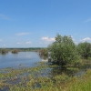 szczedrzyk-jezioro-turawskie-10