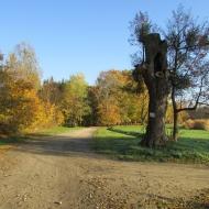 szczodre-park-4
