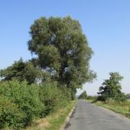 szewce-ozorowice-02