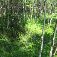 torfowisko-pod-zielencem-1.jpg