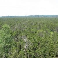 torfowisko-pod-zielencem-widok-z-wiezy-1.jpg