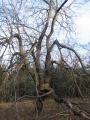 trawienska-gora-drzewo.jpg