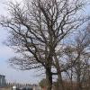 tworog-drzewa-1