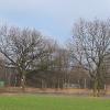 tworog-zalew-drzewa-1