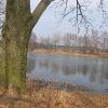 tworog-zalew-drzewa-2
