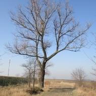 tyniec-maly-biskupice-podgorne-06