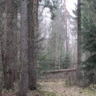 rez-uroczysko-wrzosy-13