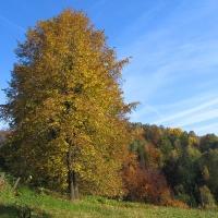 ustron-dobka-widok-drzewo.jpg