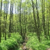 waly-chrobrego-potok