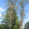 lasy-murckowskie-wiclowki-aleja-2