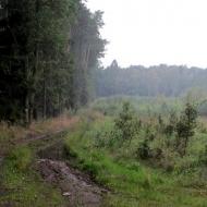 wielka-lipa-oborniki-sl-07