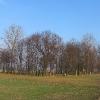 wielowies-cmentarz-zydowski-8