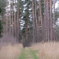 wydmy-wolow-16
