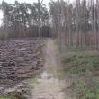 wydmy-wolow-09