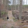 wydmy-wolow-12