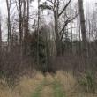 wydmy-wolow-17