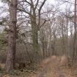 wydmy-wolow-23