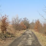 wysoka-sleza-15