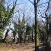 zabrze-cmentarz-zydowski-2