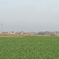 zielenice-za-4