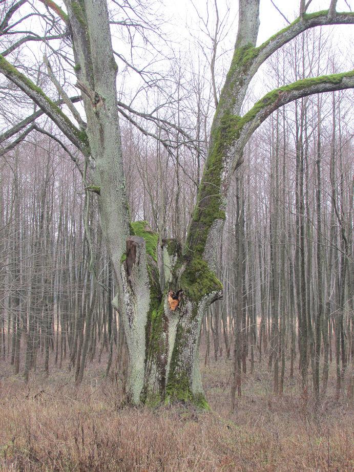 ziemsko-przed-5