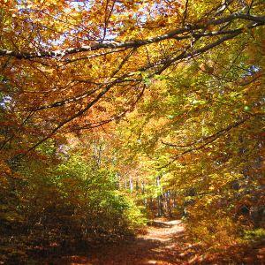 orlowa-las-jesien-3.jpg