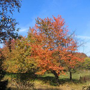orlowa-las-jesien-2.jpg