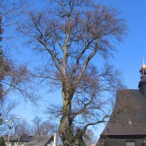 poniszowice-kosciol-drzewo