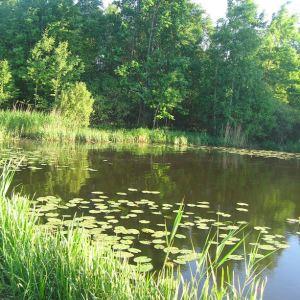 paprocany-wschod-jezioro-paprocanskie-4