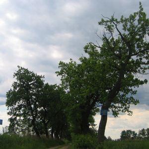 czeslawice-stawy-aleja-1