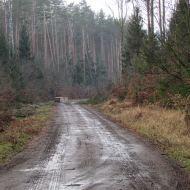 lasy-zlotowskie-02