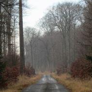 lasy-zlotowskie-06