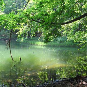jeziorka-duszatynskie-jeziorko-dolne-3.jpg
