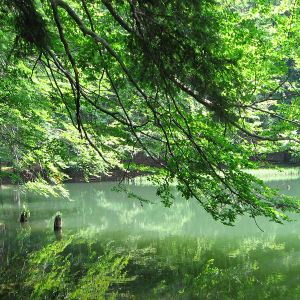 jeziorka-duszatynskie-jeziorko-dolne-1.jpg