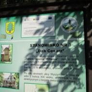 1138-oborniki-sl-ul-wyszynskiego-dab-03