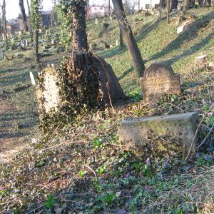 cieszyn-stary-cmentarz-zydowski-3