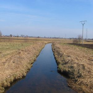 osiny-rzeka-samica