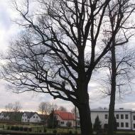 bojszow-kosciol-wszystkich-sw-drzewo