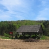 brzeznicka-gora-rezerwat-cisy-wiata