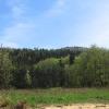 brzeznicka-gora-rezerwat-cisy-widok