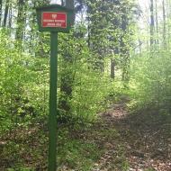 buczek-rezerwat-cisowa-gora-1