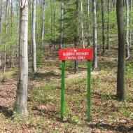 buczek-rezerwat-cisowa-gora-5