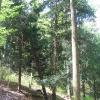 buczek-rezerwat-cisowa-gora-2