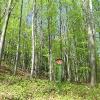 buczek-rezerwat-cisowa-gora-4